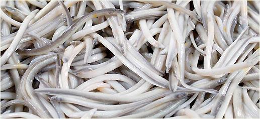 Angulas de Aguinaga, las mejores angulas del mundo