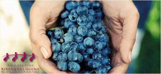Ruta del Vino Ribera del Duero